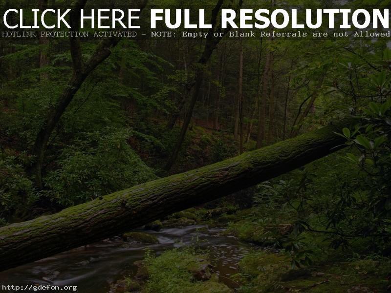 Обои Дерево, лес, листва, вода фото картики заставки