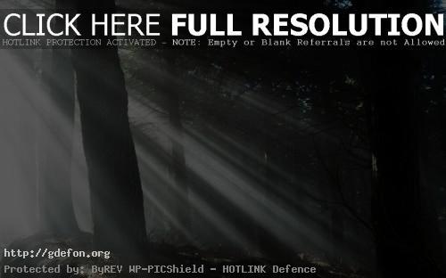 Обои Лучи света в густом лесу фото картики заставки