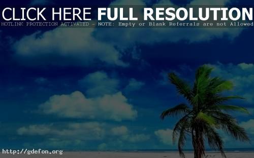 Обои Верхушка пальмы фото картики заставки