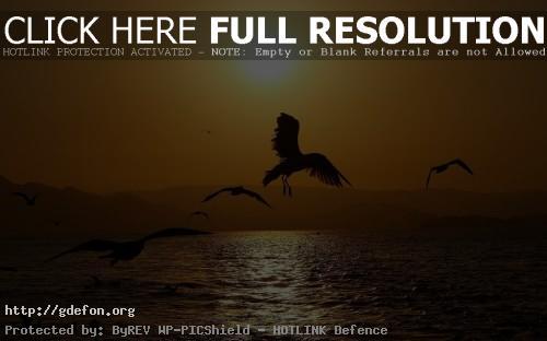 Обои Птицы над водой фото картики заставки