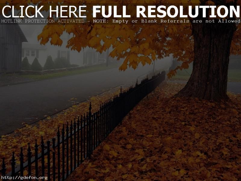Обои Осень, клен, листья, дорога, дерево фото картики заставки