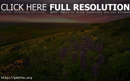 Обои Невероятный закат и цветы.Скачать фото картики заставки