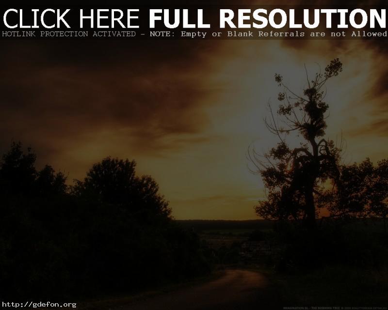 Обои Закат, солнце, небо, дерево, кусты, дорога фото картики заставки