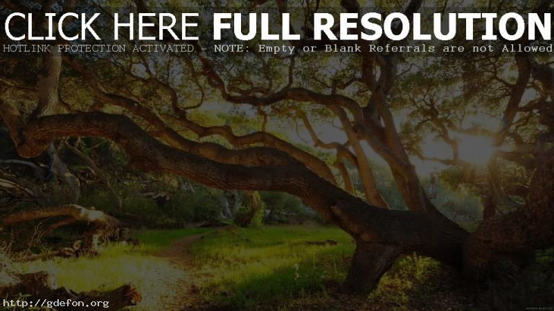 Обои Огромное дерево фото картики заставки
