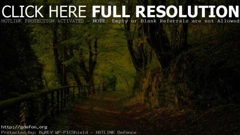 Обои Лес, деревья, листья, дорога фото картики заставки