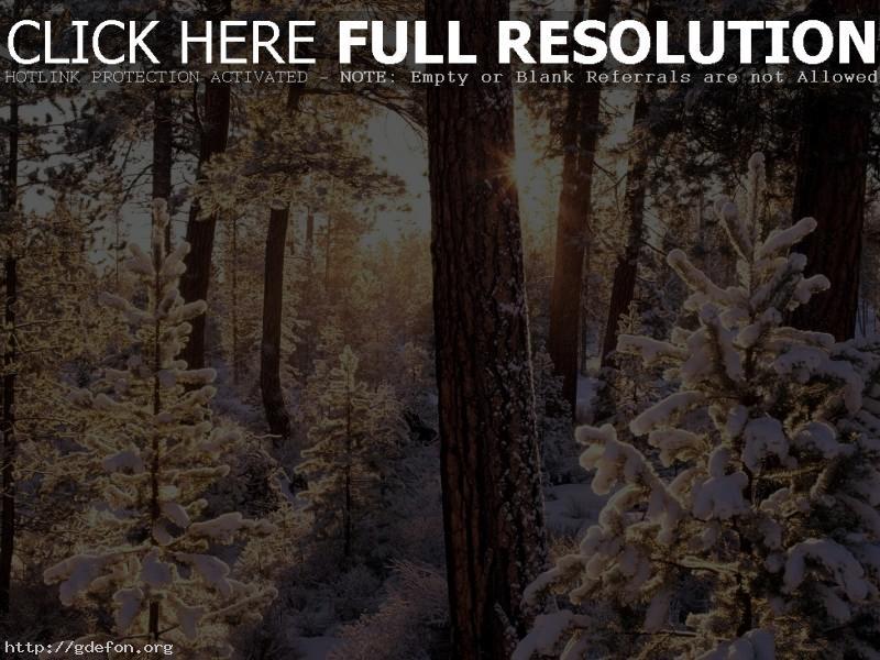 Обои Зима, лес, снег, деревья, ели, солнце, лучи фото картики заставки
