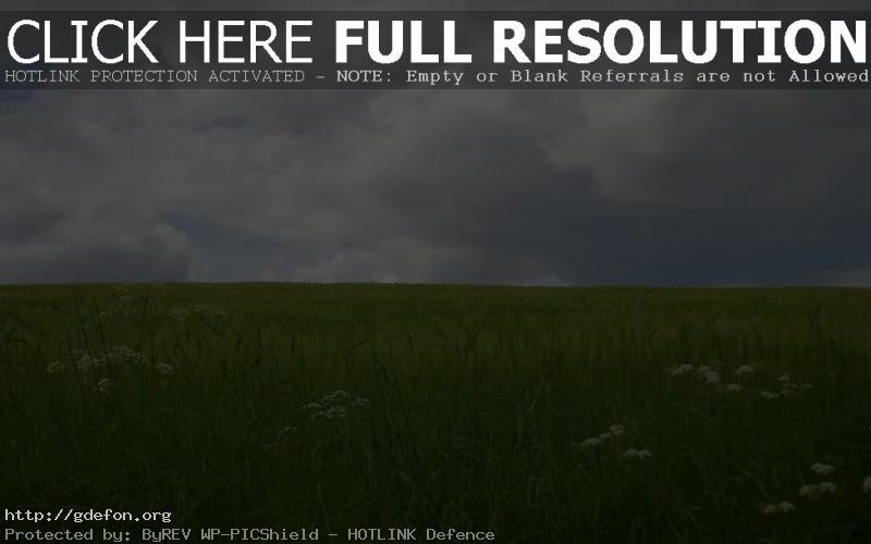 Обои Поле, трава, небо фото картики заставки