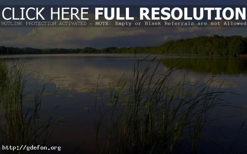 Обои Пейзаж, река, природа, небо, лес фото картики заставки