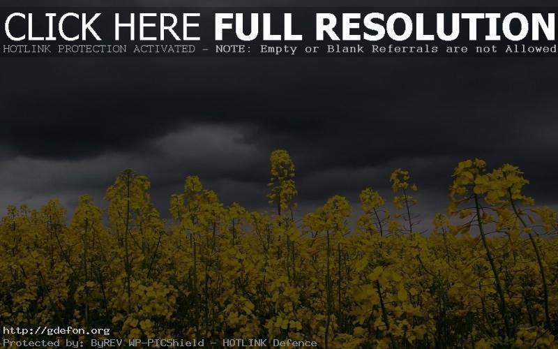Обои Цветы, небо, гроза, тучи фото картики заставки
