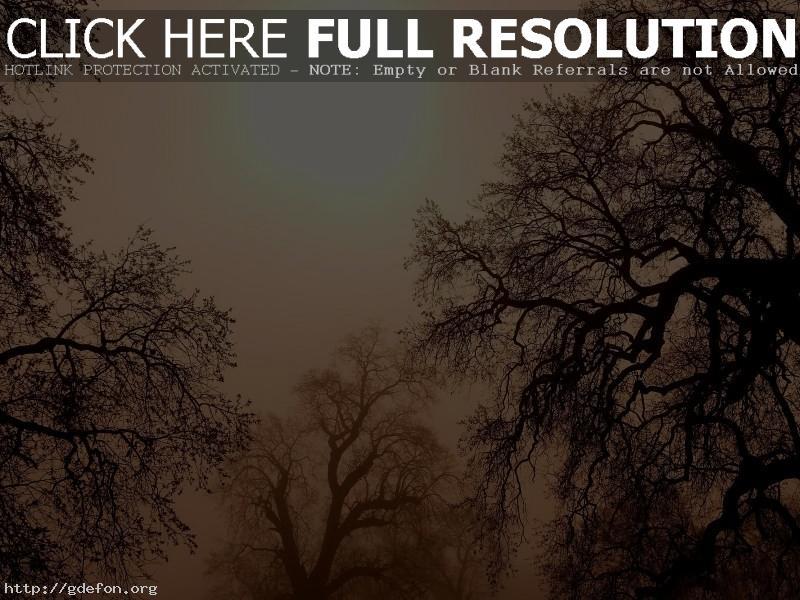 Обои Деревья, ветки, солнце фото картики заставки