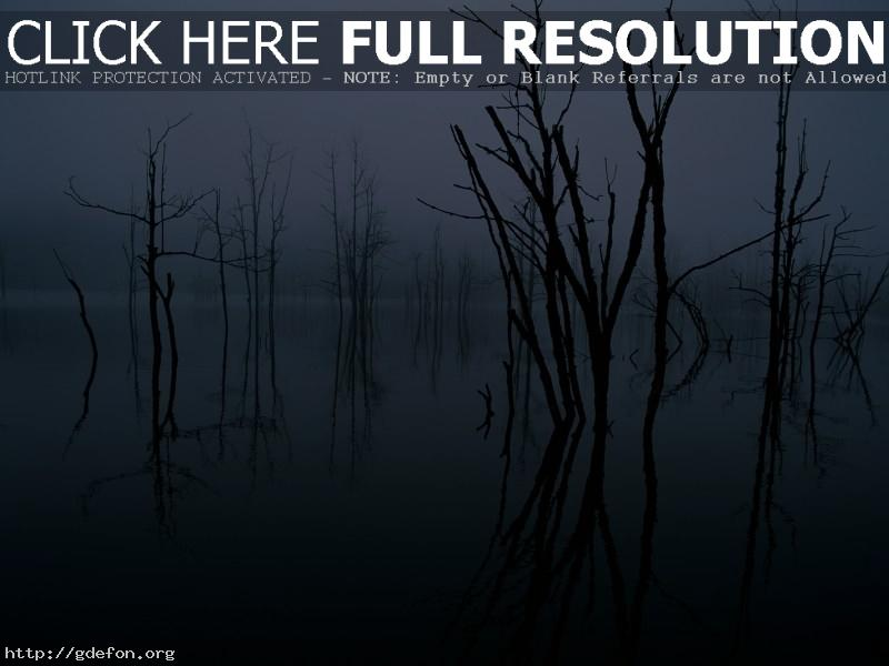 Обои отражение, деревья, озеро фото картики заставки