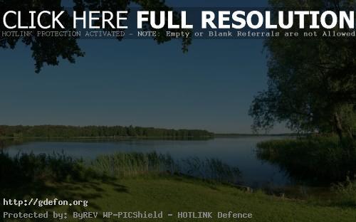 Обои Лето, река, природа, деревья, трава, камыши фото картики заставки