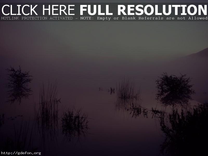 Обои Трава, туман, озеро, отражение фото картики заставки