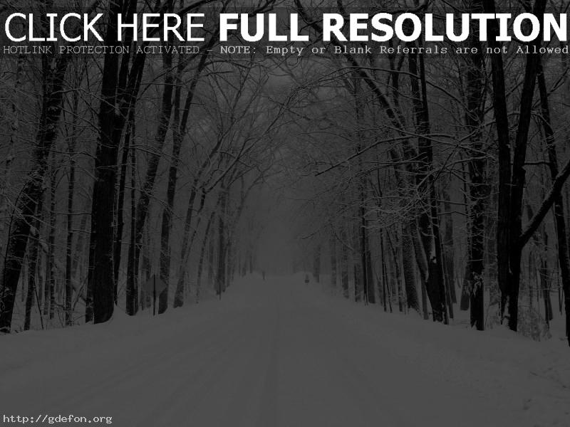 Обои Снег, дорога, лес фото картики заставки