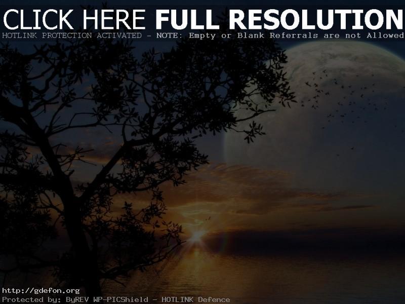 Обои Восход, море, дерево, луна фото картики заставки