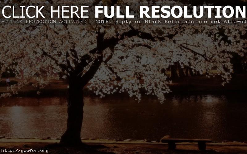 Обои Цветущее дерево на берегу реки фото картики заставки