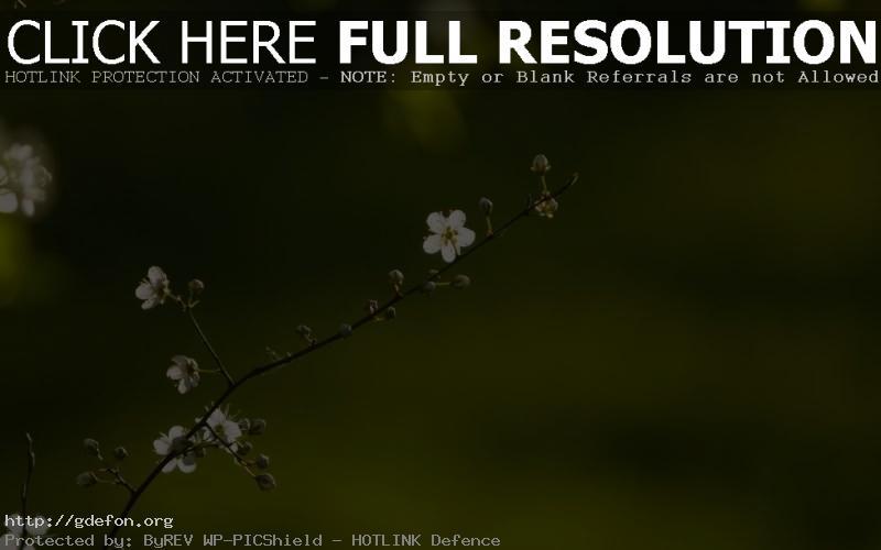 Обои Весна, веточка, цветок фото картики заставки
