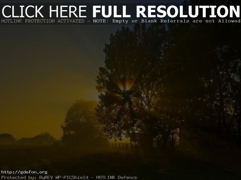 Обои Ночь, солнце, восход, дерево фото картики заставки