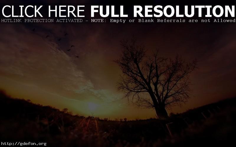 Обои дерево, закат, солнце фото картики заставки