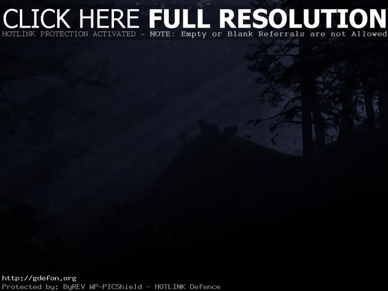 Обои Лес, волки, свет, ночь фото картики заставки