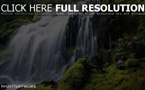 Обои Водопад с рододендроном фото картики заставки