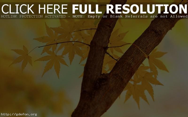 Обои Осень, листья, ветка фото картики заставки