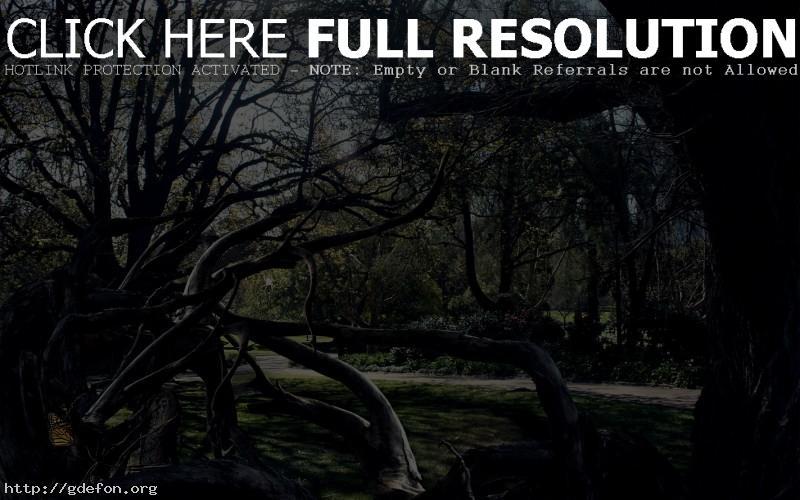 Обои Деревья, паутина, паук, тёмные фото картики заставки