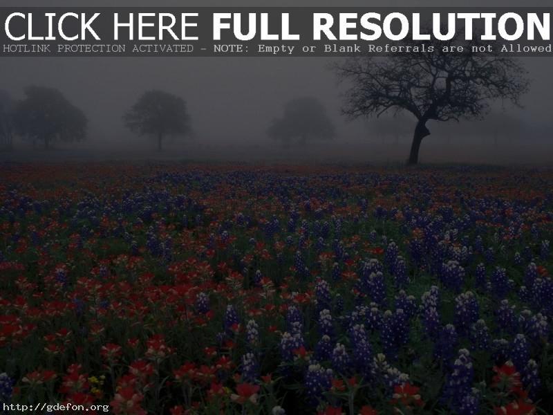 Обои Цветочная поляна в тумане фото картики заставки