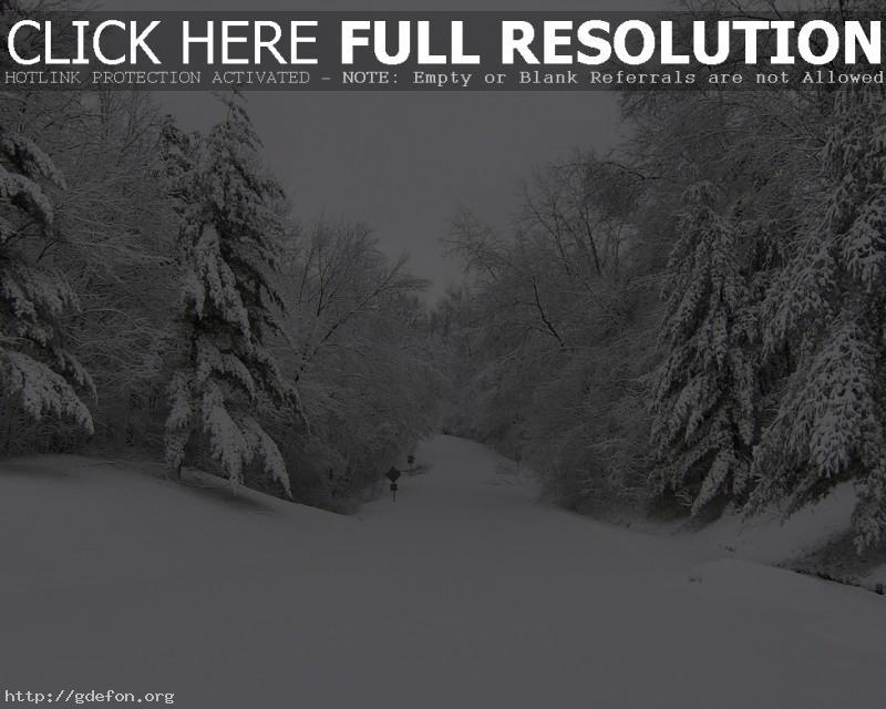 Обои Зима, деревья, дорога, снег фото картики заставки