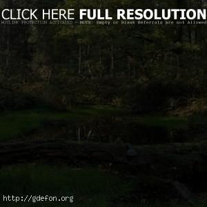 ручей, лес, деревья