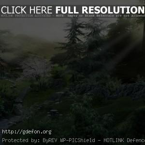Тропинка, лес, луч, солнце