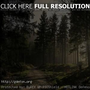 Лес, дорога, солнце, лучи, свет