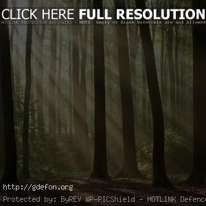 Лучи света сквозь деревья