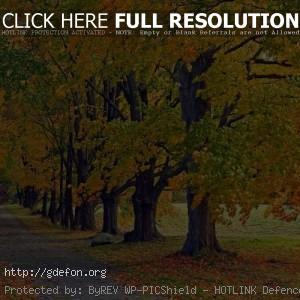 деревья в осеннем одеяние