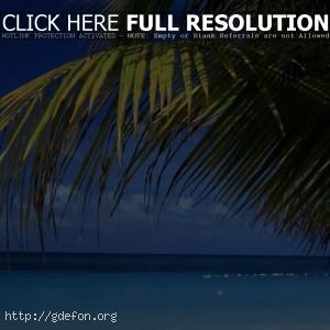 Пляж, море, ветка