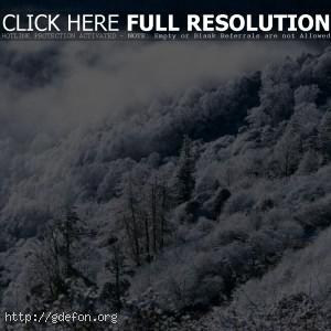 Зима, лес, горы, туман