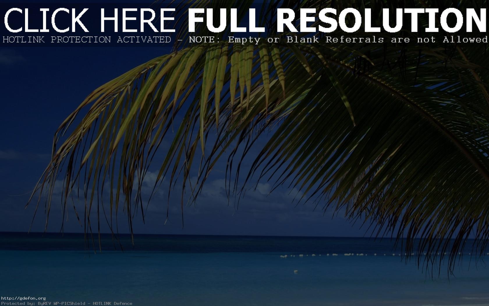 день фотографии на рабочий экран пальмы для