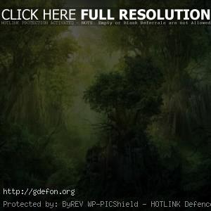 Лес, деревья, скала
